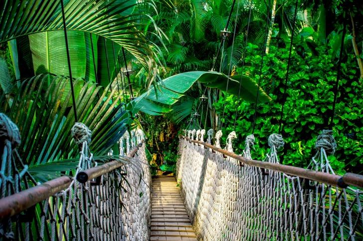 Suspension bridge in the palms