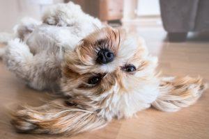 Dog head upside down on the floor