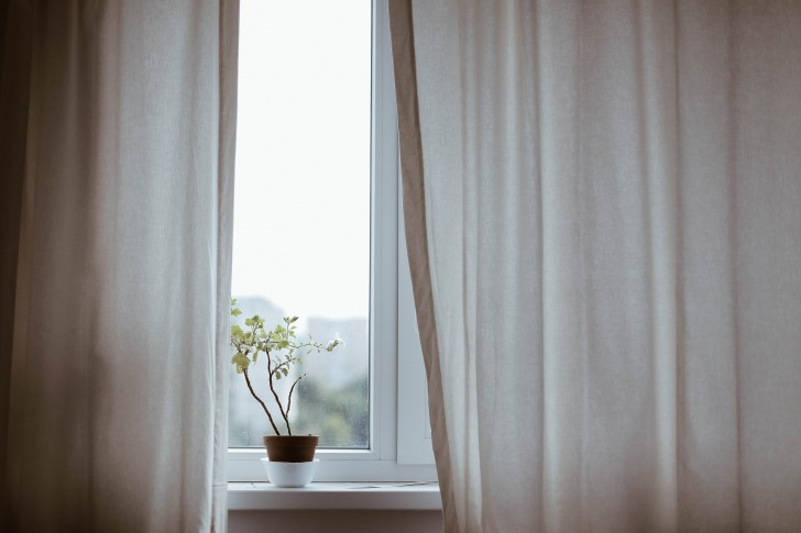 Plant behind curtains