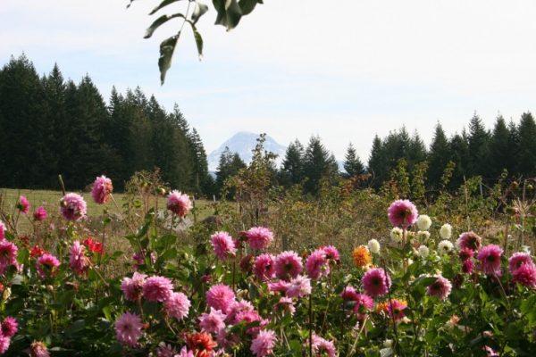 Traveling, Oregon, Hiking, Elk Meadows