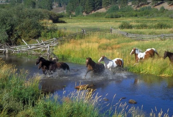 Traveling, Camping, Montana, Great Falls