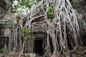 Tree root shelter