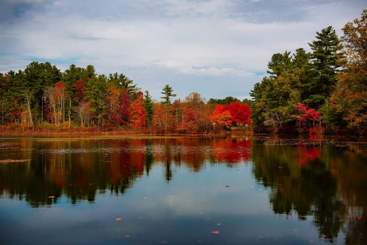 Walden Pond/ Image by David Mark from Pixabay