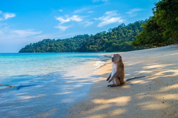 Traveling, Thailand, Guide, Places to See, Koh Rok, Beaches