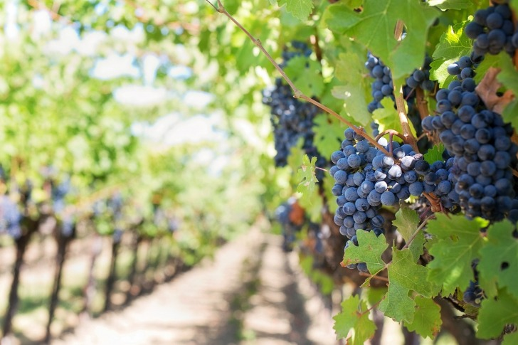 This retreat located near Austin offers tasting wines at a local vineyard/ Image by Jill Wellington from Pixabay