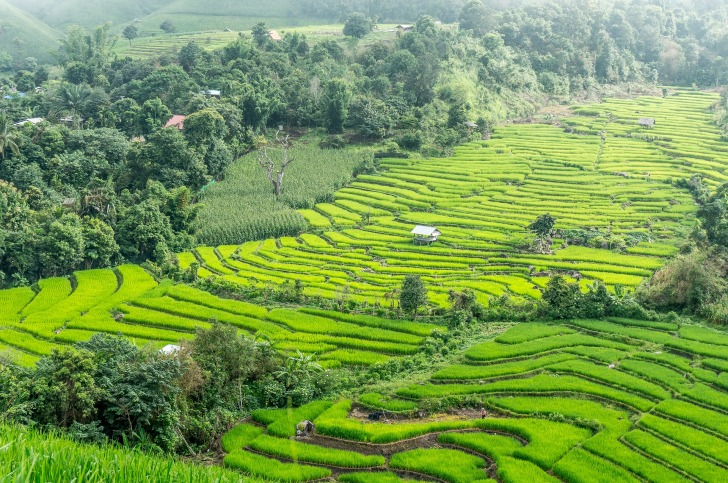 Rice terraces in Thailand/ Image by hereisthailand from Pixabay