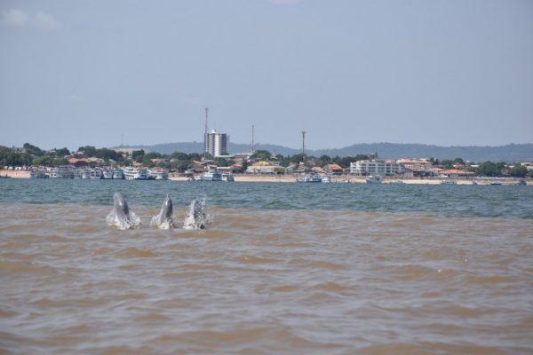 Traveling, Amazon River, Cruises, Aria