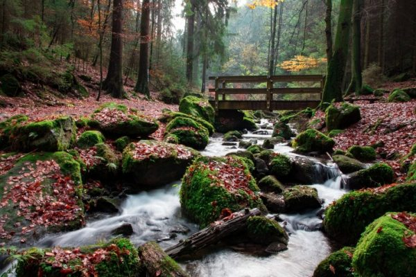 Traveling, Oregon, Hiking, Silver Creek Falls